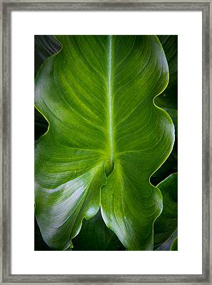 Aaron Berg Photography Framed Print featuring the photograph Big Green by Aaron Berg