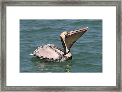 Big Gulp  Framed Print