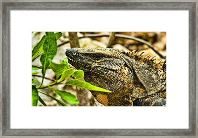 Big Lizard Framed Print