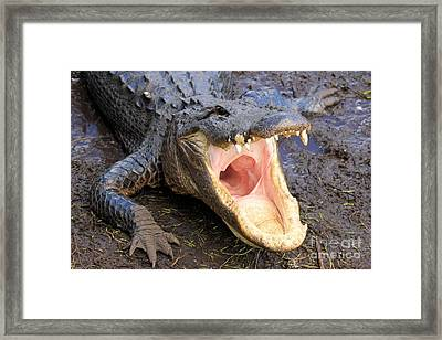 Big Mouth Framed Print by Adam Jewell