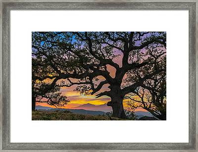 Big Oak Framed Print