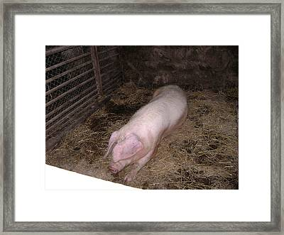Big Pig Framed Print