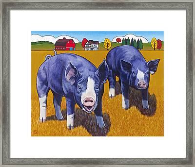 Big Pigs Framed Print