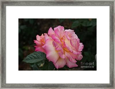 Big Pink...   # Framed Print by Rob Luzier
