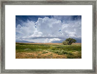 Big Sky And Tree Framed Print