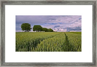 Big Sky Montana Wheat Field  Framed Print