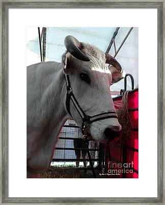 Big Steer Framed Print by Megan Dirsa-DuBois