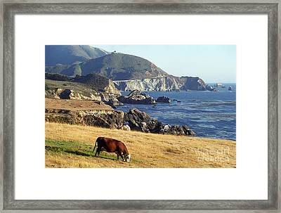 Big Sur Cow Framed Print