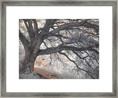 Big Sur Oak Framed Print by Jane Linders