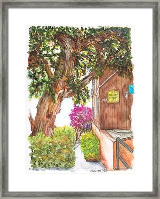 Big Tree At The Bead Shop, Laguna Beach, California Framed Print