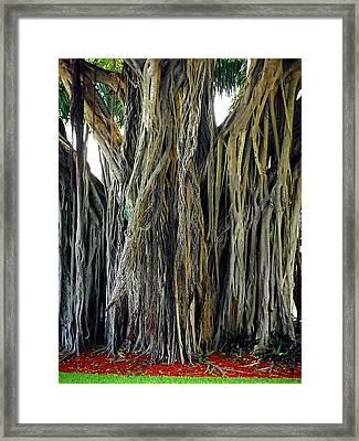 Big Tree Framed Print by Aggie Janowska
