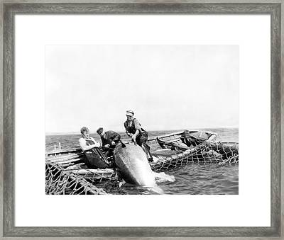 Big Tuna Fishermen Framed Print by Underwood Archives