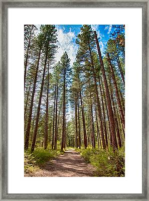 Big Valley Views Mvsta Trail Framed Print