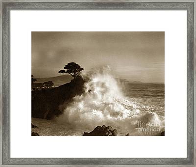 Big Wave Hitting The Lone Cypress Tree Pebble Beach California 1916 Framed Print