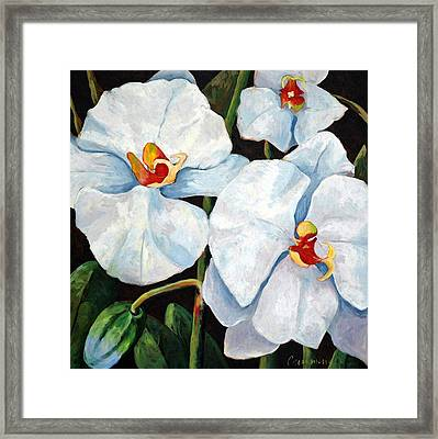 Big White Orchids - Floral Art By Betty Cummings Framed Print by Sharon Cummings