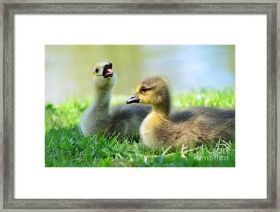 Big Yawn Framed Print by Kathleen Struckle