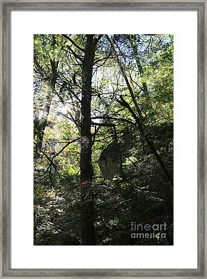 Bigelow Forest Light Framed Print