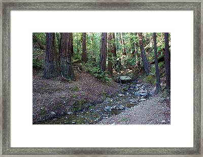 Bigfoot On Mt. Tamalpais Framed Print by Ben Upham III