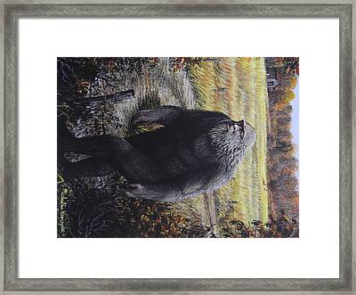 Bigfoot Wooly Booger Framed Print