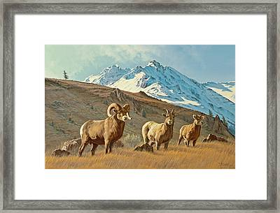 Bighorn Below Electric Peak Framed Print by Paul Krapf