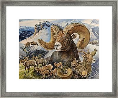 Bighorn Lifescape Framed Print by Steve Spencer