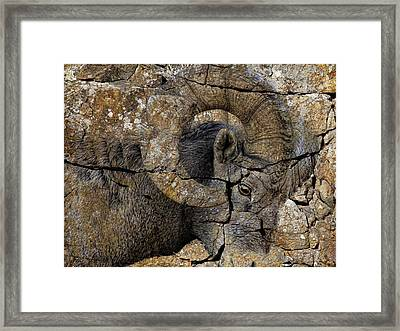 Bighorn Rock Art Framed Print by Steve McKinzie