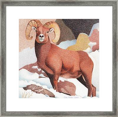 Bighorn Sheep Winter Framed Print