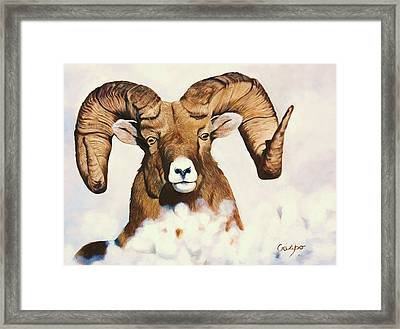 Bighorn Sheep Framed Print by Jean Yves Crispo