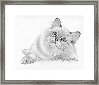 Bight Eyes Framed Print by Barb Baker