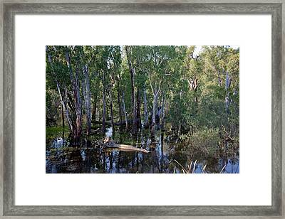 Billabong Framed Print