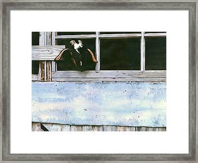 Bill's Goat Framed Print