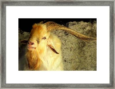 Billy Goat Gruff Framed Print