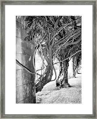 Biltmore Arbor Asheville Nc Framed Print
