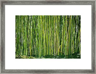 Biltmore Bamboo Framed Print