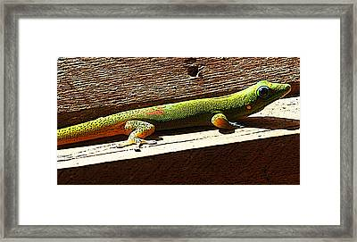 Binky The Gecko Framed Print by Colleen Cannon
