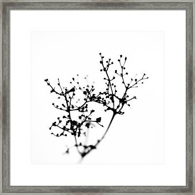 Biochemistry Of Winter 2 Framed Print