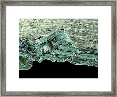 Biodegradable Carrier Bag Framed Print