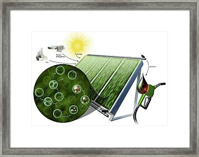 Biofuel From Algae Framed Print by Nicolle R. Fuller