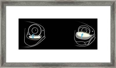 Bioluminescent Fish Anatomy Framed Print by Claus Lunau