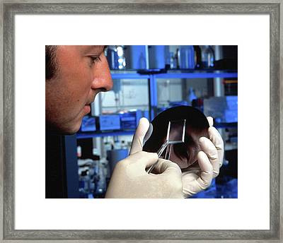 Bioscience Microchips Framed Print by Ibm Research