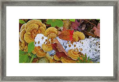 Birch And Fungi Framed Print