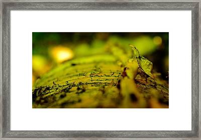 Birch Framed Print