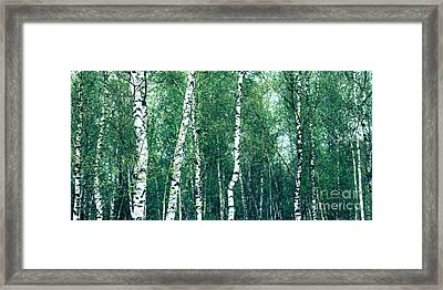 Birch Forest - Green Framed Print by Hannes Cmarits