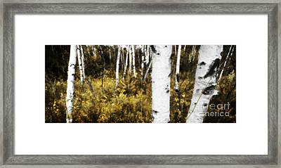 Birch Forest I Framed Print