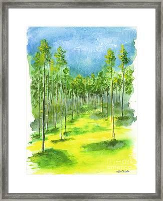 Birch Glen Framed Print