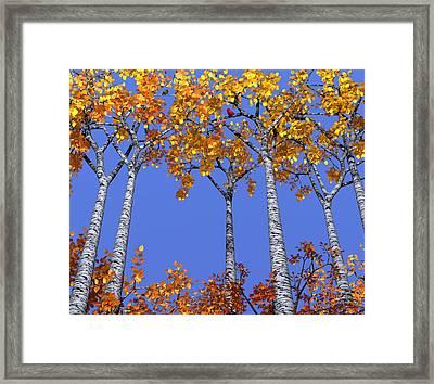 Birch Grove Framed Print by Cynthia Decker