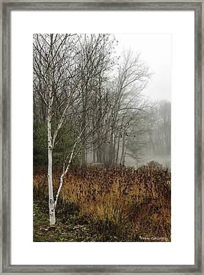 Birch In Winter Framed Print