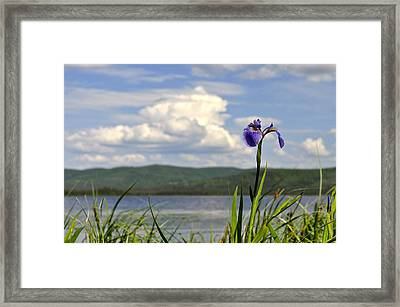 Framed Print featuring the photograph Birch Lake Iris by Cathy Mahnke
