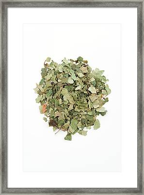 Birch Leaves Framed Print by Geoff Kidd/science Photo Library