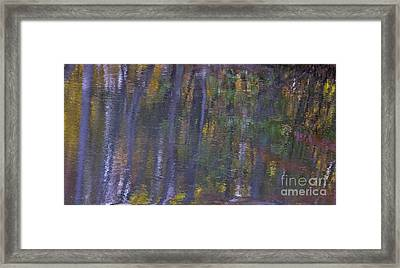 Birch Reflections Framed Print by Cindy Lee Longhini
